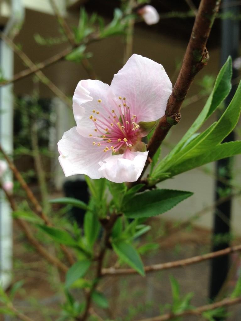 Mystery Tree Bloom (2)