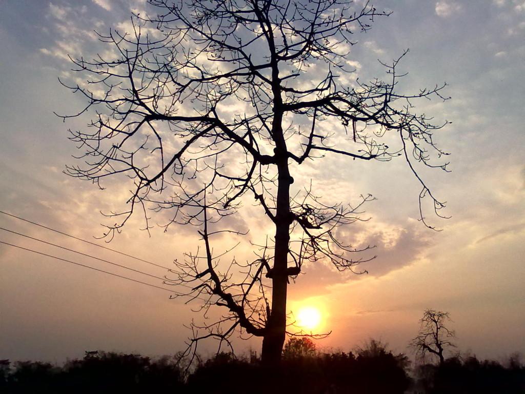 Natural_Beauty_of_Kalaigaon