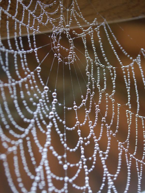 spider_web_with_dew_by_kameleonklik
